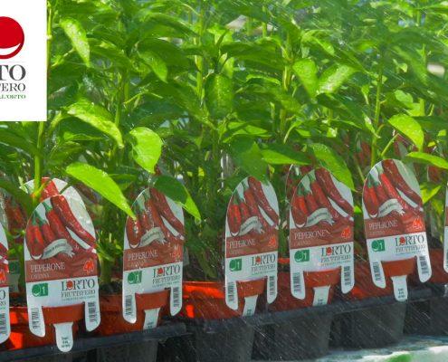 ortofrutticolo azienda agricola, serra